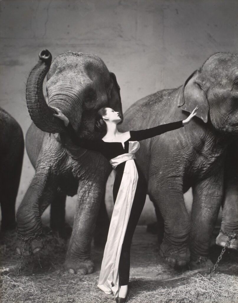 Dovima with Elephants, Evening Dress by Dior, Cirque d'Hiver, Paris August 1955
